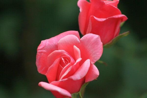 Gedichte Zum Valentinstag Eine Besonders Persönliche