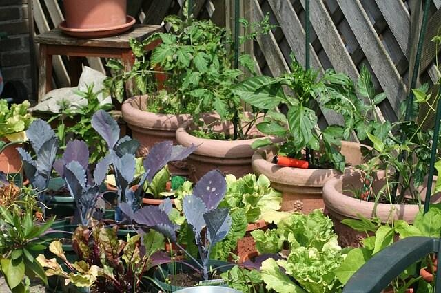 Gemüsegarten anlegen – eigenes Gemüse auf Ihrem Balkon!